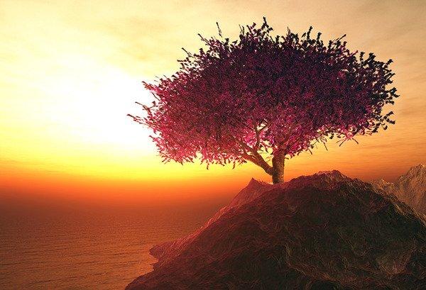Cherry blossoming tree