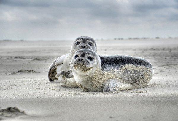 Bałtyckie foki