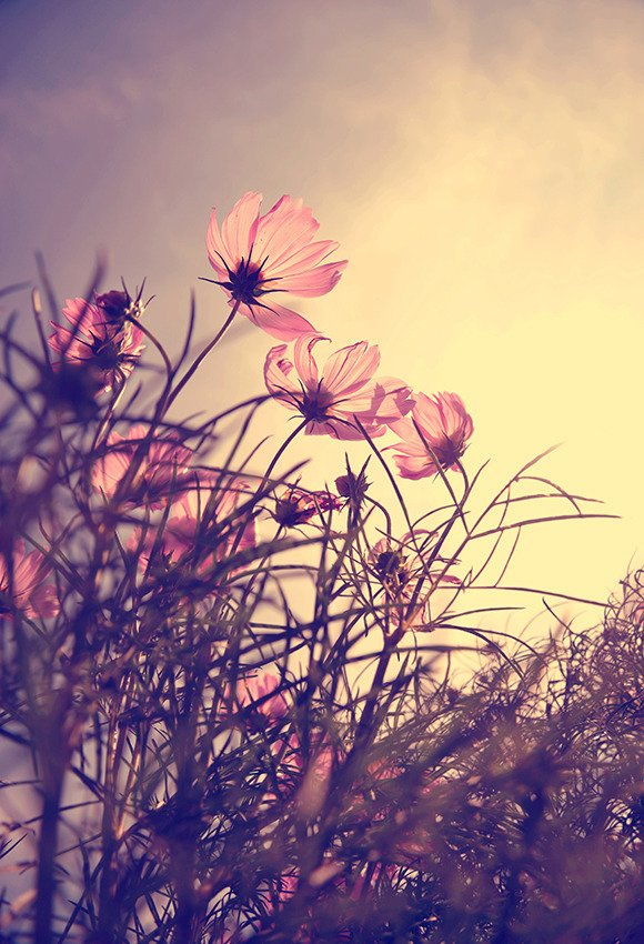 Kwiaty o zachodzie słońca