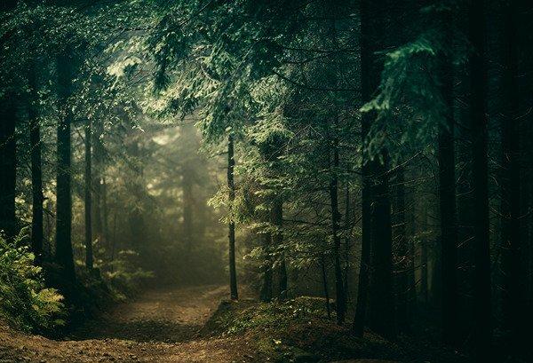 Leśna wiejska droga
